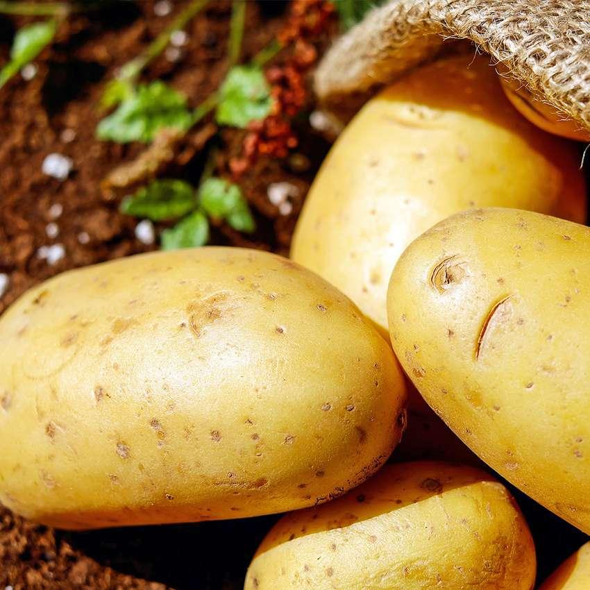 Settore di applicazione prodotti Tecnoklima - conservazione patate e tuberi