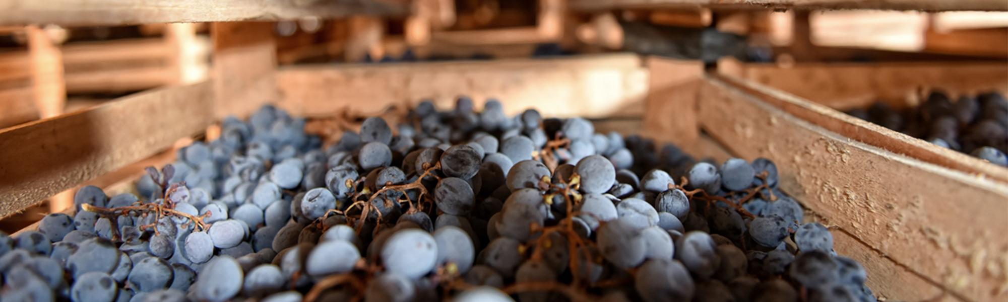 La deumidificazione per l'appassimento dell'uva