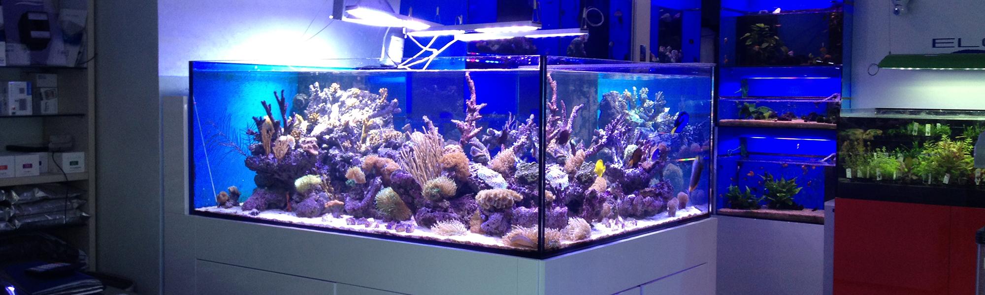 Barriera d'aria per proteggere i negozio di acquari dagli insetti
