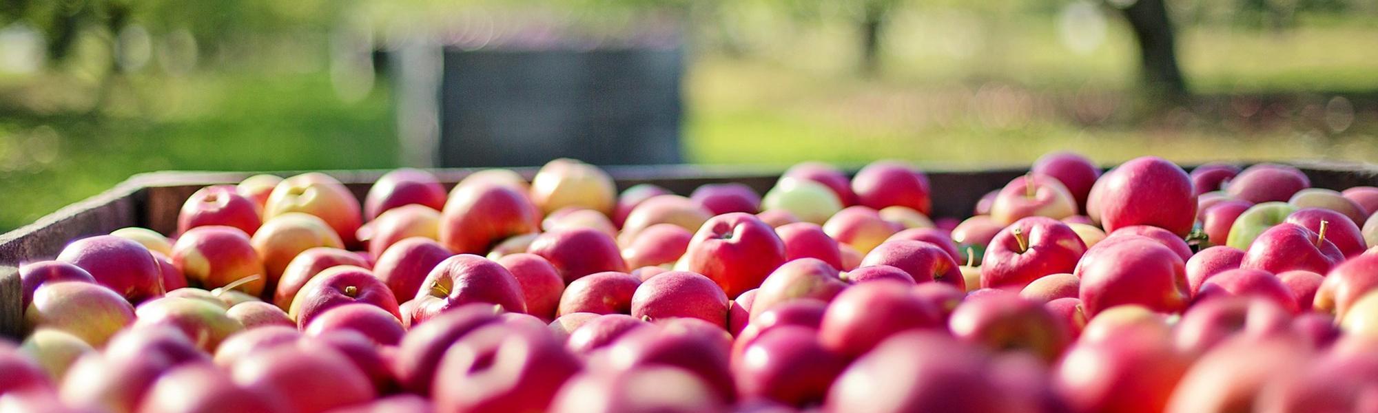 L'importanza dell'umidità per i prodotti alimentari